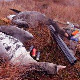 Охота на гуся мелкой дробью видео