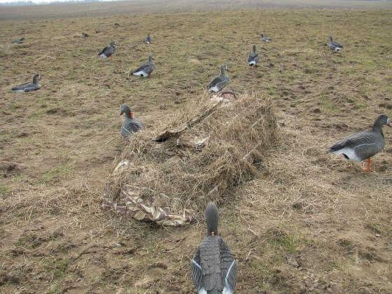 Охота на гуся с чучелами со скрадка видео