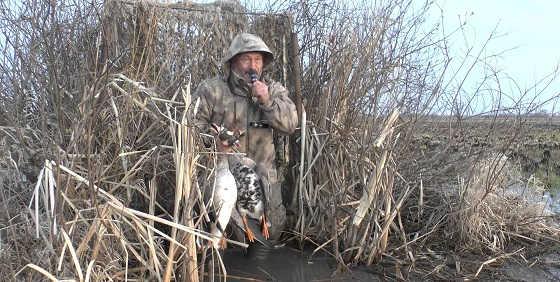 Охота на гуся весной в Рязани видео