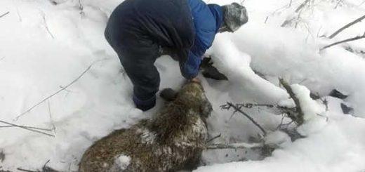 Охота на кабана зимой в 2018 видео
