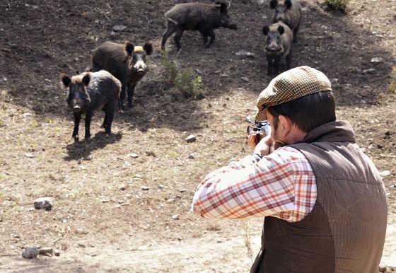Охота на кабанов в Турции видео