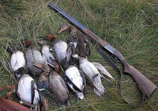 Охота на утку: советы