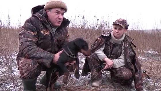 Охота с норными собаками в Тульской области видео