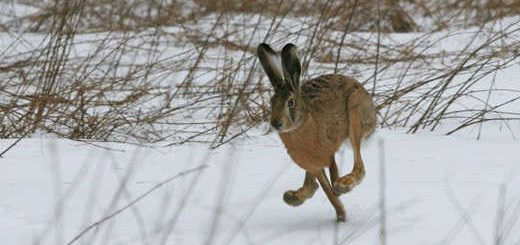 Охота зимой в Беларуси видео