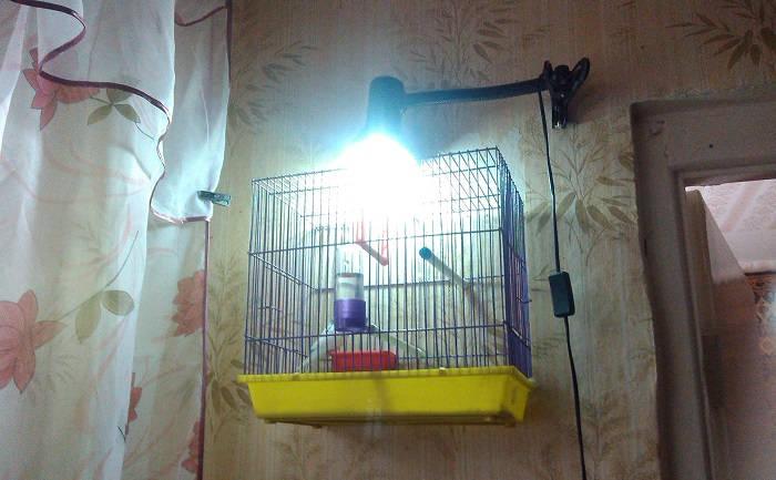 Освещение для попугаев