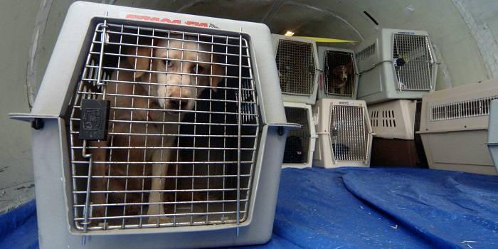 Перелет на самолете с собакой