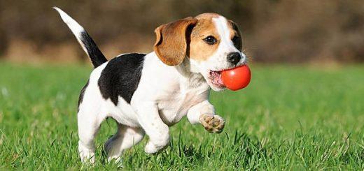 Уход и забота о щенке