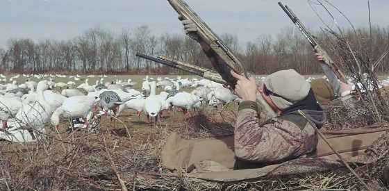 Весенняя охота на гуся в 2017 видео
