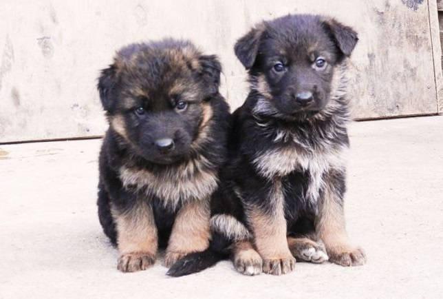 Воспитание маленьких щенков
