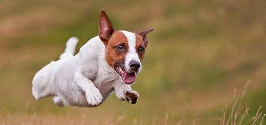 Физическая нагрузка для собак
