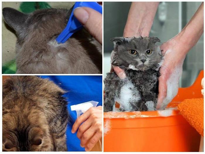 Как избавить кошку от блох