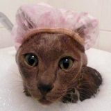 Косметика для кошек