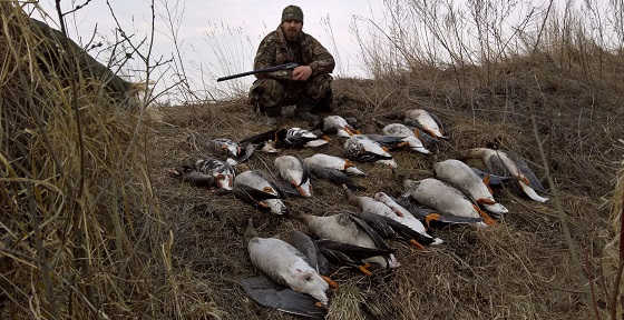Охота на гуся в Беларуси в 2018 видео