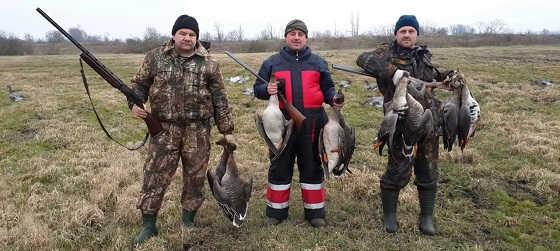 Охота на гуся весной 2018 в Беларуси видео