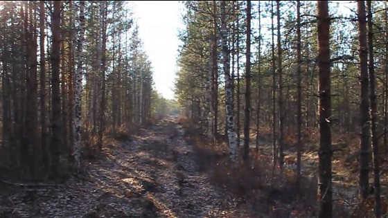 Весенняя охота на рябчика с манком видео