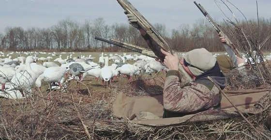 Опасная охота на гуся видео