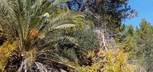 Осень в Израиле