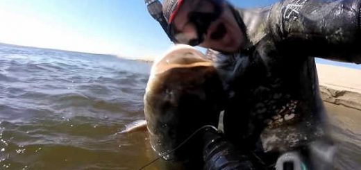 Подводная охота 2018 в Волгограде видео