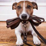 Принципы дрессировки собак