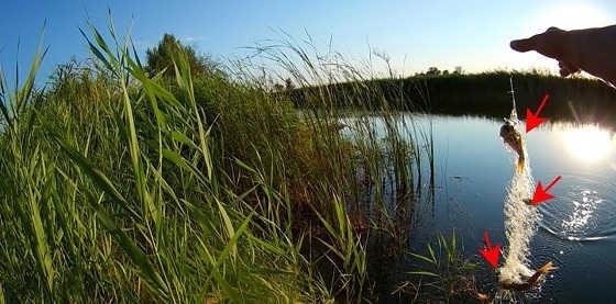 Рыбалка на сетку с кормушкой с Алиэкспресс видео