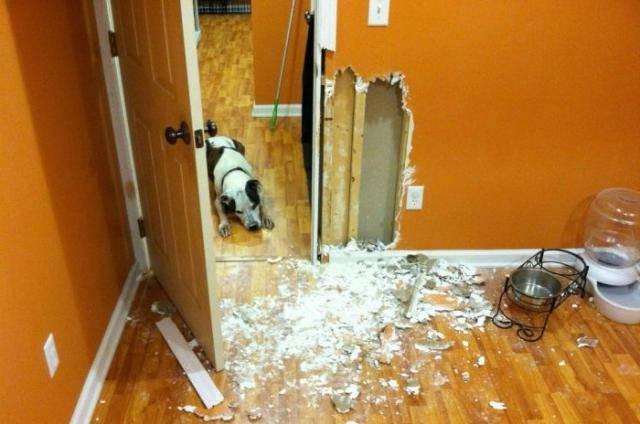 Собака в квартире – за и против