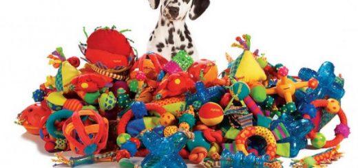 На сайте http://zooparadise.com.ua/ можно заказать качественный сухой корм для собак разных пород и возрастов.