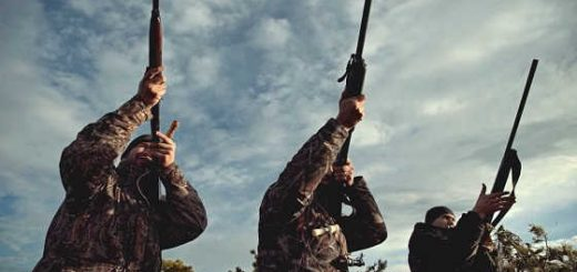 6 дуплетов: охота на гуся - видео