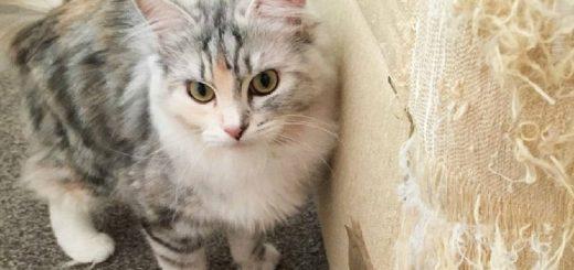 Почему кошки царапают мебель?