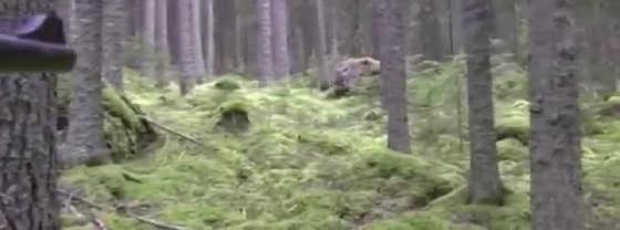 Интересные моменты с разных охот видео