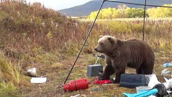 Нападение медведя на Камчатке видео