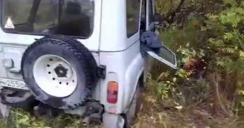 Нападение медведя на УАЗ видео