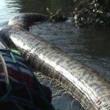 Огромная змея в реке видео