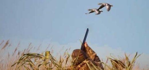 Охота на гуся: на перелете, с чучелами на поле, с подхода - видео