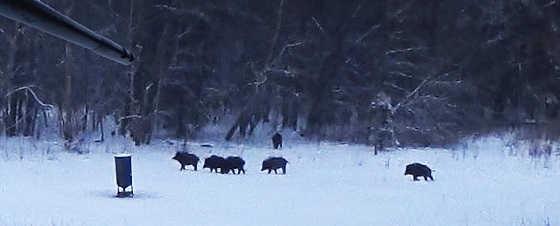 Охота на вышке - вышло стадо - видео