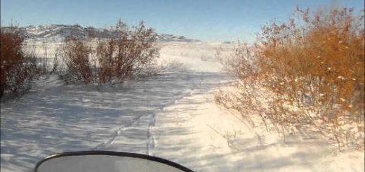 Охота на волка в Акмолинской области видео
