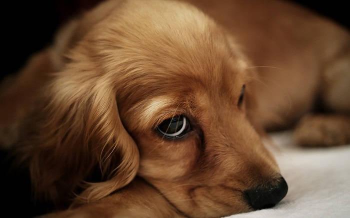Опухоли головного мозга у собак