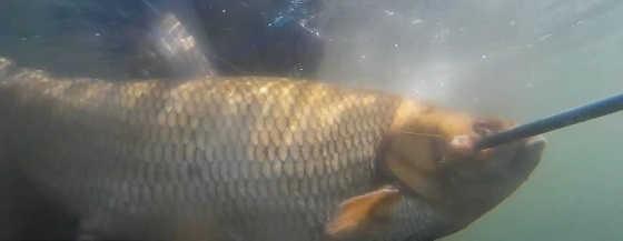 Подводная охота на малой реке в марте видео