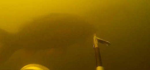 Подводная охота в залежке осень 2018 видео