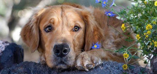 Признаки аллергии у собак