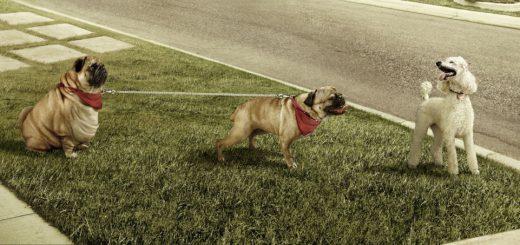 Собаки в рекламах