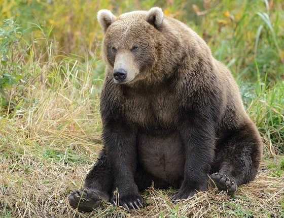 Один из способов защиты от медведя видео