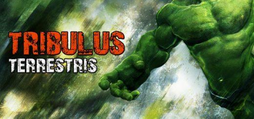 Что такое трибулус