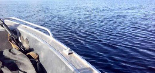 Как змея может из воды заползти в лодку видео
