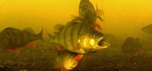 Ловля на силикон - подводная съемка