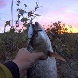 Ловля на спиннинг на малых реках Узбекистана видео