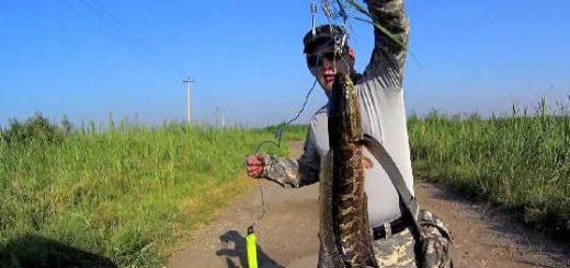Ловля змееголова в Узбекистане видео
