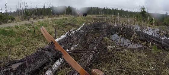 Медведь атакует лучника видео