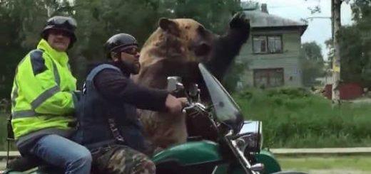 Медведь на мотоцикле в Северодвинске видео