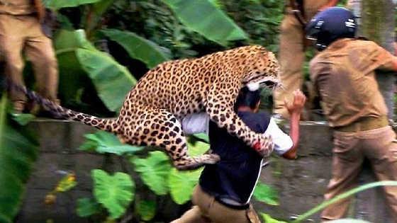 Нападение животныхна людей видео