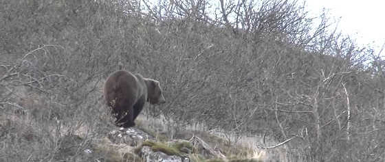 Охота на медведей в Канаде видео